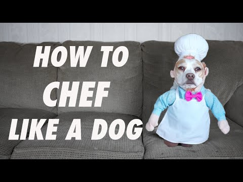 How to Chef Like a Dog: Funny Dogs Maymo & Penny