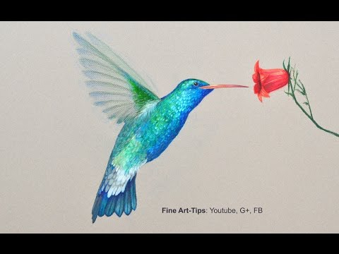 How to Draw a Hummingbird - Drawing With Color Pencils