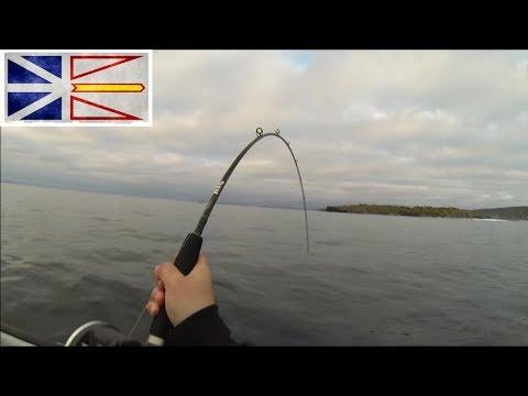 Cod Fishing Newfoundland 2017