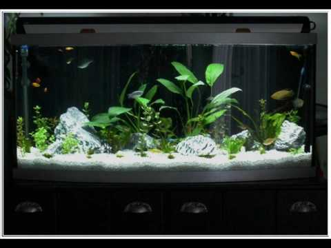 72 gallon bow front aquarium and cabinet project part 3 of for Bow front fish tank