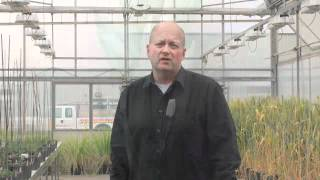 Wheat School - Three Key Components of Fusarium Head Blight Management