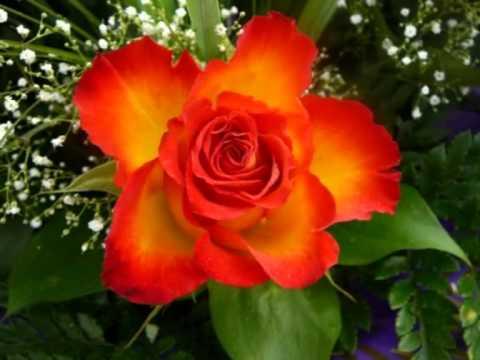 С праздником ВЕСНЫ  Цветы на 8 марта