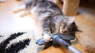 Видео приколы про кошек!Кошки и пылесос!Подборка№1!