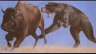 Top 7 Greatest Land Predators