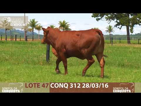LOTE 47 CONQ 312