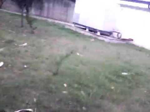 http://genio.virgilio.it/domanda/145303/che-cosa-fanno-piante-notte