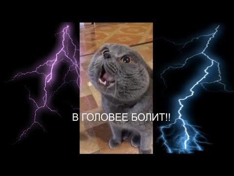 Кот говорит: \