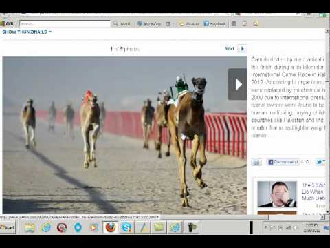 What does Bible prophecy have to do with racing camels?