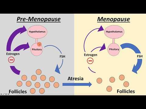 Poliklinika Harni - AMH pretkazuje menopauzu