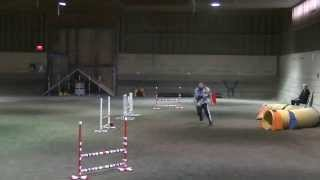 Shayla Dog Agility Advanced Snooker At Avid Aac Trial On Sept 21 2013