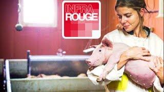 Une vie de cochon Documentaire diffusé le 12/11/2013 sur France 2