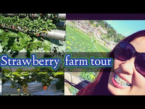 Exploring Strawberry Farm In Benguet | Part2 Ng Baguio Tour.