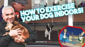How to Exercise Your Dog Indoors (Using a Treadmill!)