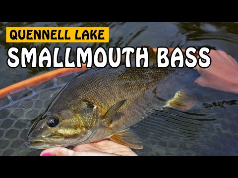 QUENNELL LAKE SMALLMOUTH BASS ON VANCOUVER ISLAND BC | Fishing With Rod