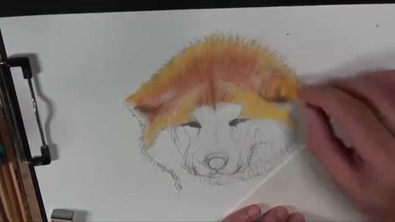 Akita Inu 秋田犬 How To Draw Youtube