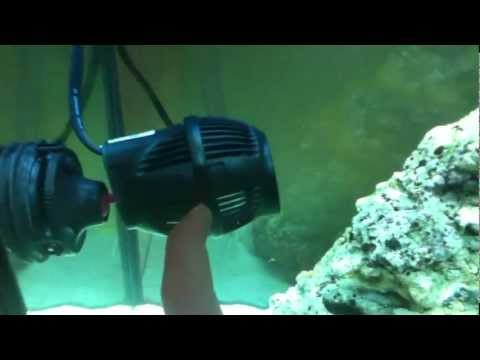 55g Saltwater Reef Aquarium (Nine Months)из YouTube · Длительность: 1 мин37 с