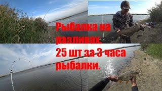 Осенняя рыбалка на сазана и змееголова на разливах Казахстан река Или
