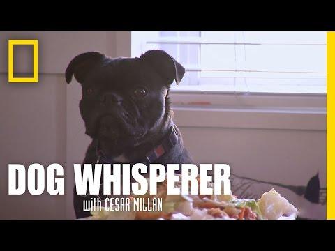 Marley's Manners | Dog Whisperer