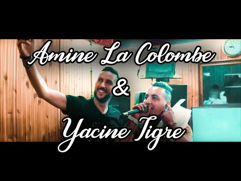 Yacine Tigre 2018: Mahada mahada avec  Amine La Colombe