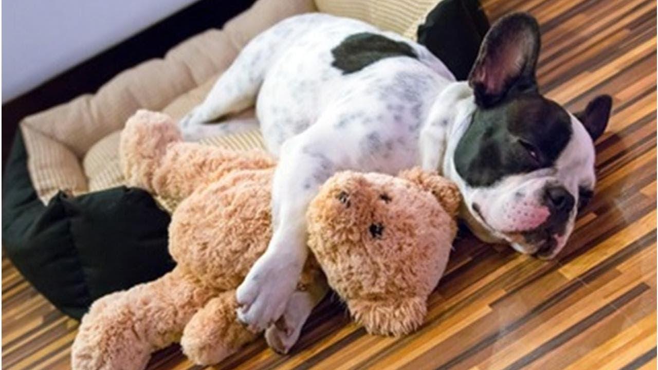時 痙攣 寝 てる 犬