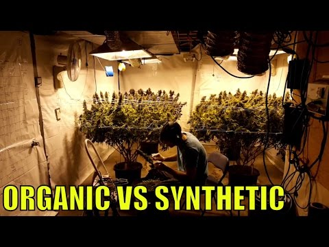 CANNABIS VLOG 005.  ORGANIC VS SYNTHETIC. HOW LONG TO VEG CANNABIS PLANTS?