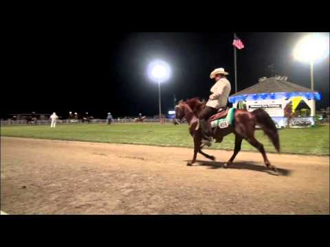 Missouri Fox Trotter 3 Years Futurity Stallion and Geldings: AVA 2015