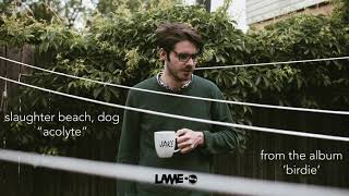 Slaughter Beach, Dog - Acolyte