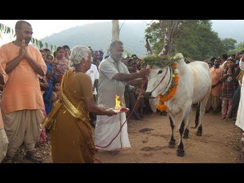 Pongal Celebrations 2018 - Isha Yoga Center