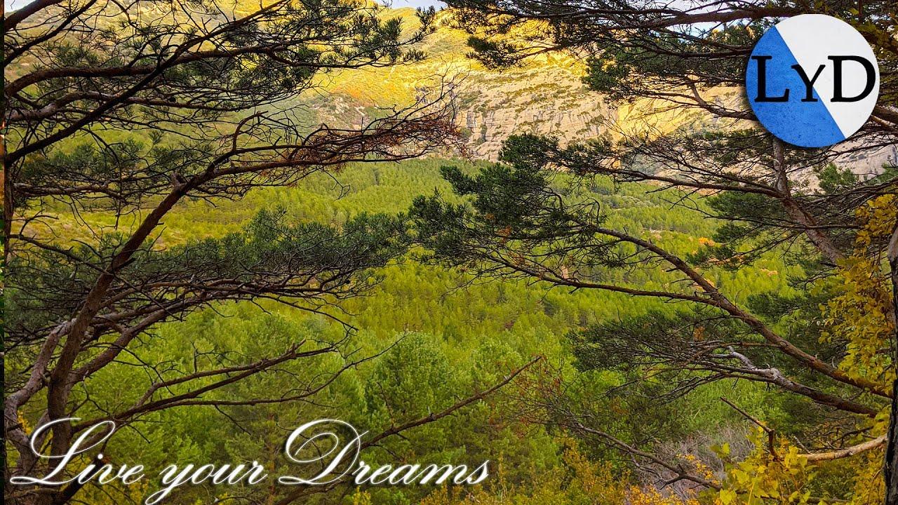 Día Lluvioso en el Bosque 🌧 La Naturaleza y sus Sonidos en Estado Puro 🌲