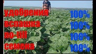 """видео Семена подсолнечника от ТОВ """"Насіння соняшника"""""""