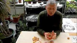 Гладиолусы- подготовка луковиц к посадке(Как правильно подготовить луковицы гладиолусов к посадке, о важном агротехническом приеме рассказывает..., 2012-04-19T15:02:44.000Z)