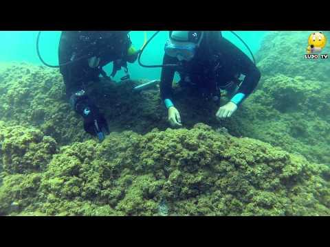 Baptèmes de plongée avec le Capes