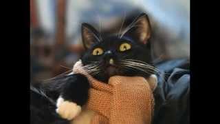 Смешные коты и кошки. Лучшее видео про смешных кошек и котов! Very funny cats.