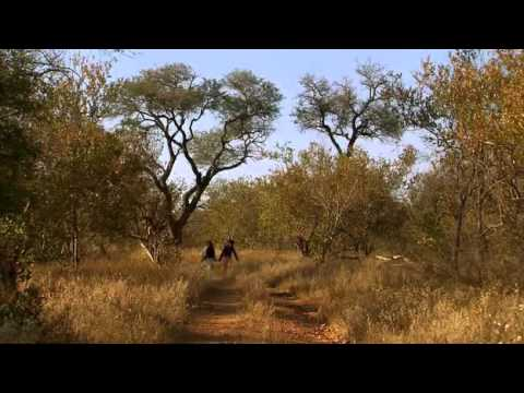 غابات افريقيا الافتراس Africa's forests predation