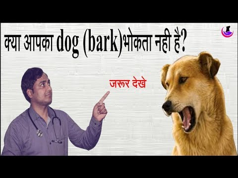 Dog Barking Problem ll Must see II dog and vet II