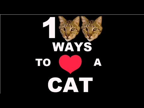 100 Ways To Love A Cat: Ways 1100