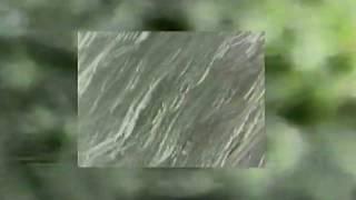 Flavio Scutti - Magic Plants