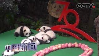 [中国新闻] 四川:2019年出生的7只大熊猫宝宝齐亮相 | CCTV中文国际