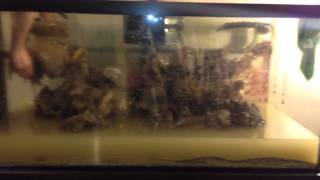 How To Move A Coral Reef Fish Tank Part 2