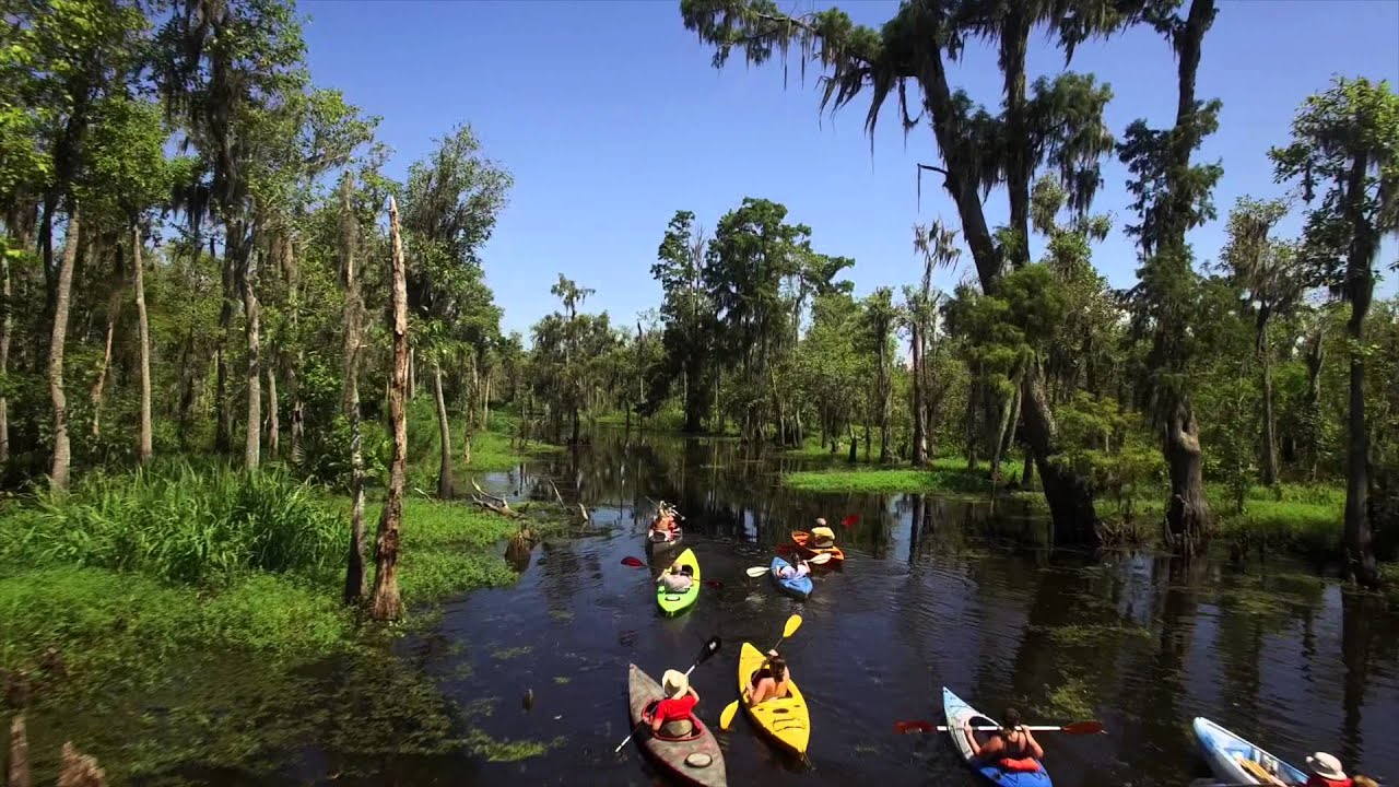 Free Swamp Tours New Orleans