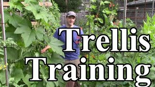 2 Min. Tip: How We Train Crops Up Trellises (vertical Gardening)