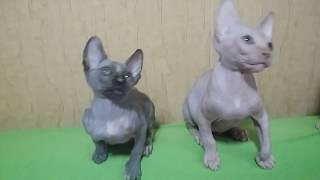 Канадский сфинкс котята продаются