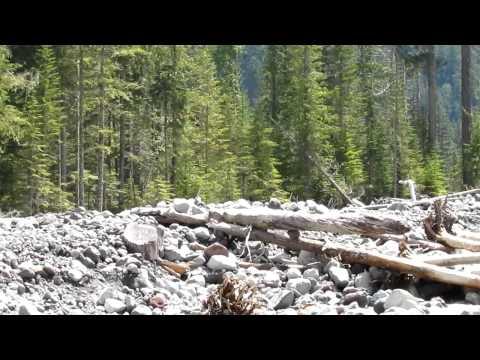 Carbon River Trail -about 2 more miles to Carbon Glacier