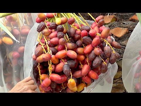 My #1 FAVORITE FRUIT TREE for My GARDEN