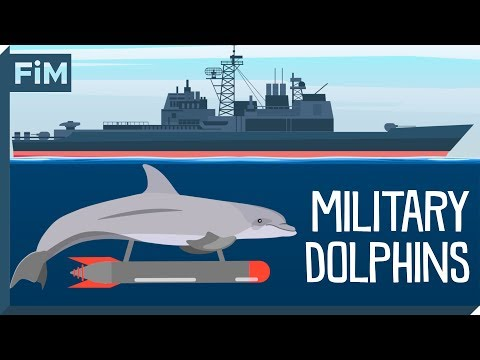 How the U.S. Navy trained over 100 Dolphins for War