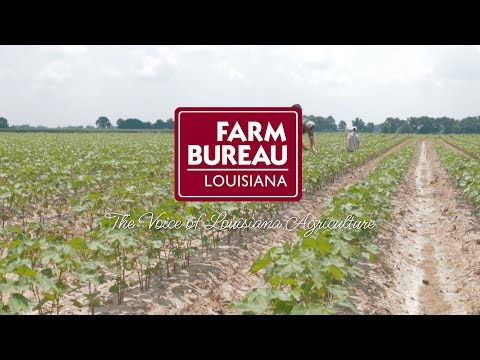 We Are Farm Bureau