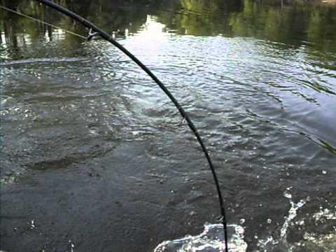 Neuse River Bowfin Fishing