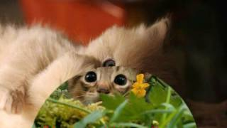 Самые милые котята!Смотреть любителям котиков.
