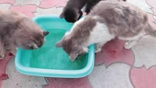 Смешные КОТЫ на рыбалке ДВОЙНОЙ CHALLENGE LizaTube