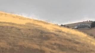 Beagle Hound Hunter Uses Deer For Morning Exercise